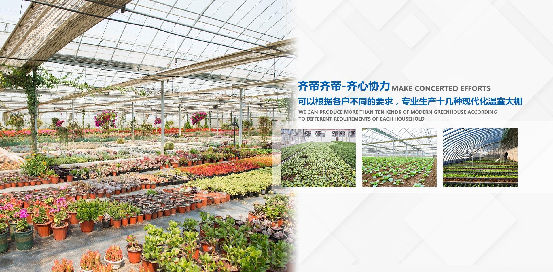 温室蔬菜大棚,温室大棚建造,连栋大棚建造