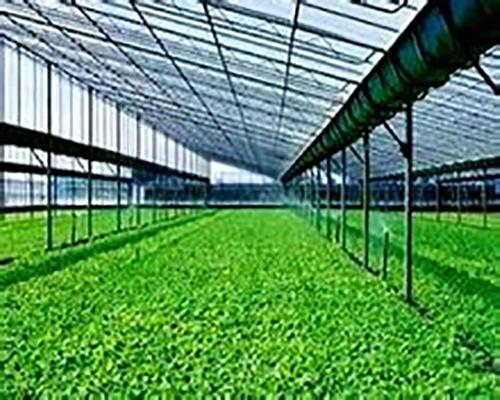 安徽玻璃温室大棚