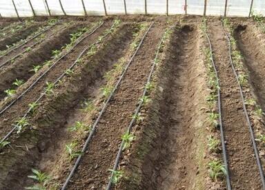 上海节水灌溉方式及优点