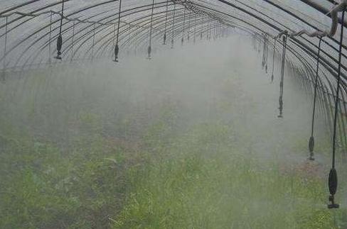 上海温室大棚中使用较多的灌溉技术