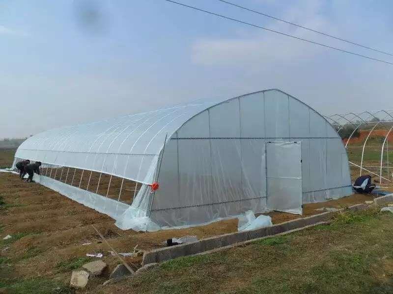 上海冬季蔬菜温室大棚放风