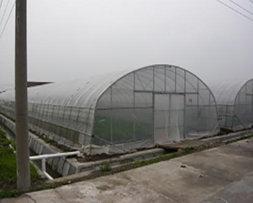 云南单体温室大棚