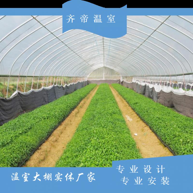 云南蔬菜单体拱棚 水果单体拱棚 单体拱棚价格 齐帝单体温室大棚
