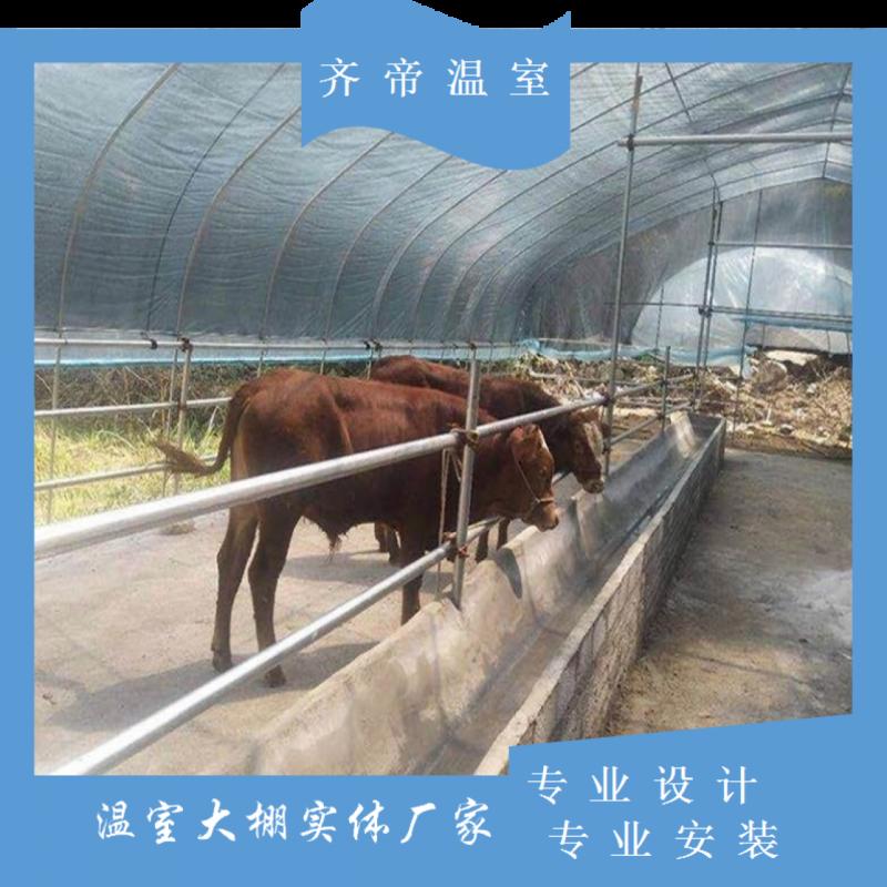 云南齐帝养殖大棚 加固型大棚骨架 大棚钢管 卷膜通风 养殖黑白膜